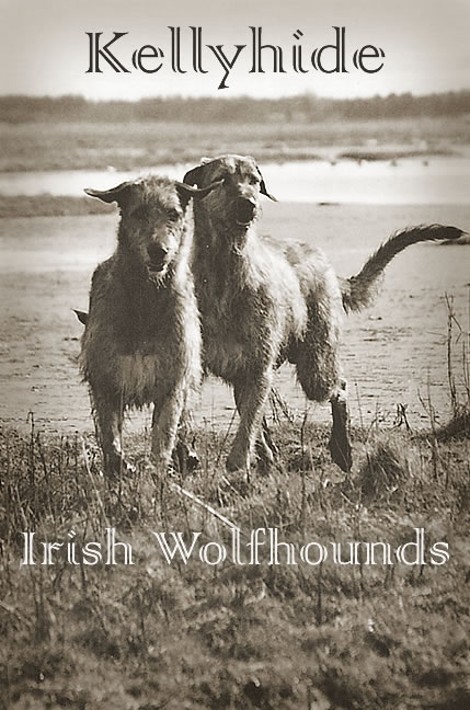 Kellyhide Irish Wolfhounds
