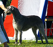 Allegria winning her last CACIB in Sweden, July 2006