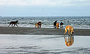 Kellyhide Hounds, Seaside