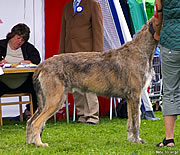 Ambrosius, July 2006, Winning his Swedish Championship